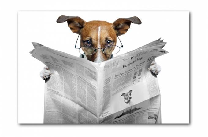 tableau-animaux-chien-lisant-le-journal-55x80-cm-11877_680x450